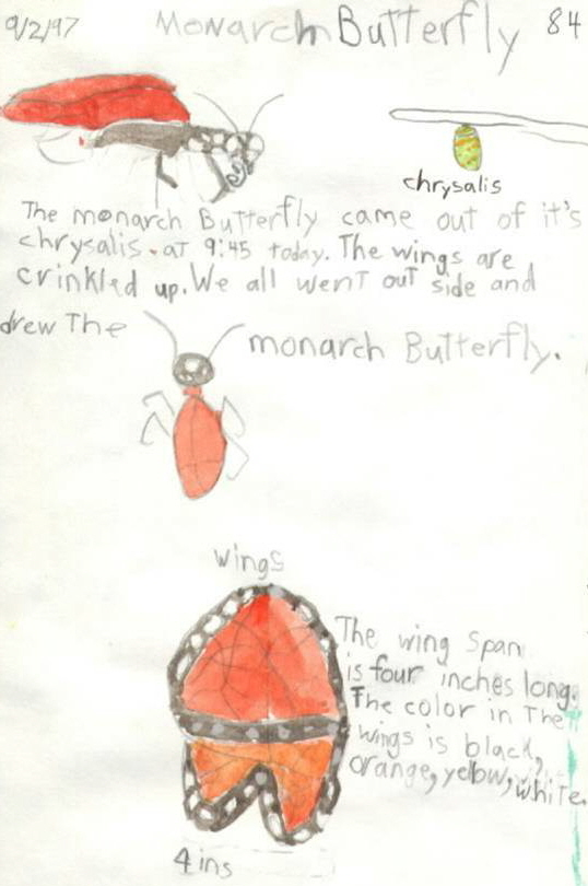 Butterfly life cycle (child)
