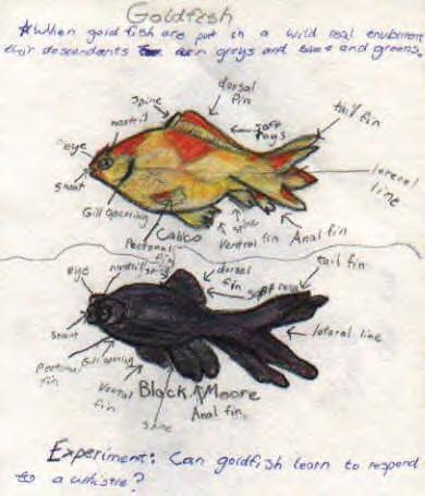Diagramming parts of a fish