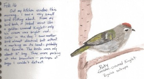 Penny's nature journal page